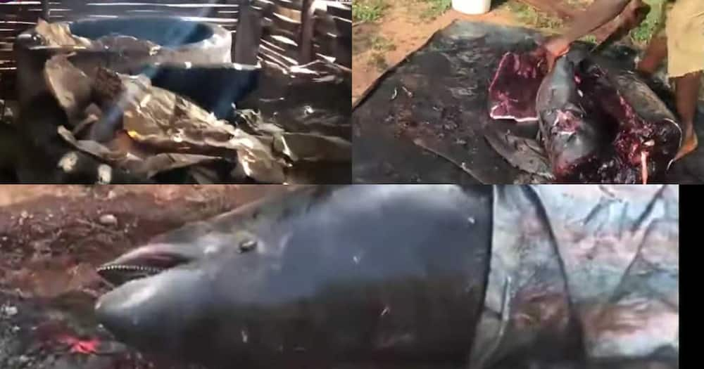 Axim residents turn dead dolphins to 'Momoni' and smoked fish for sale on the market