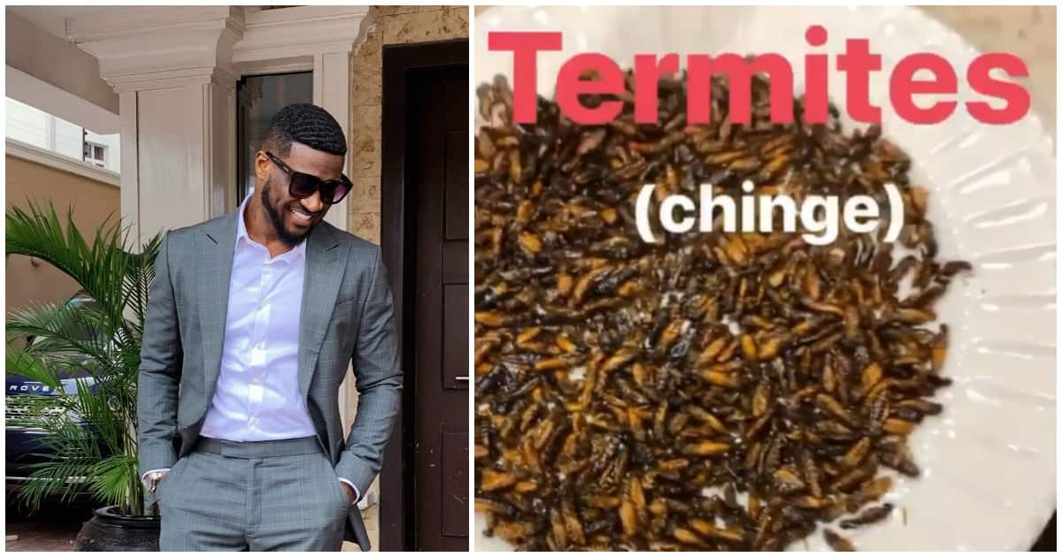 Peter Okoye enjoys a meal of termites, reveals other insects he loves eating