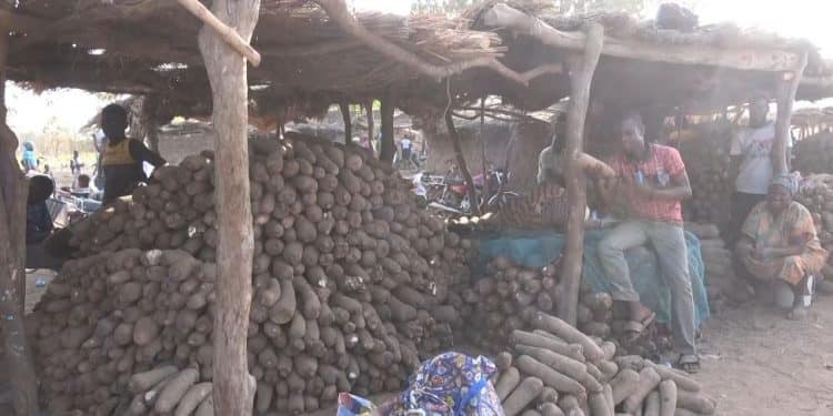 N/R: Hundreds of yam tubers rot away as farmers lack storage facilities