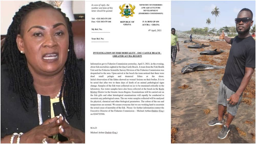 Fisheries Ministry probes mysterious dead fishes at beaches, stays silent over its sale