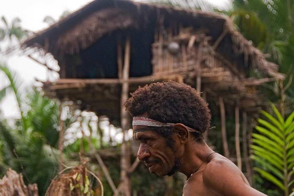 The Korowai are a secretive tribe. Photo: Daily Mail