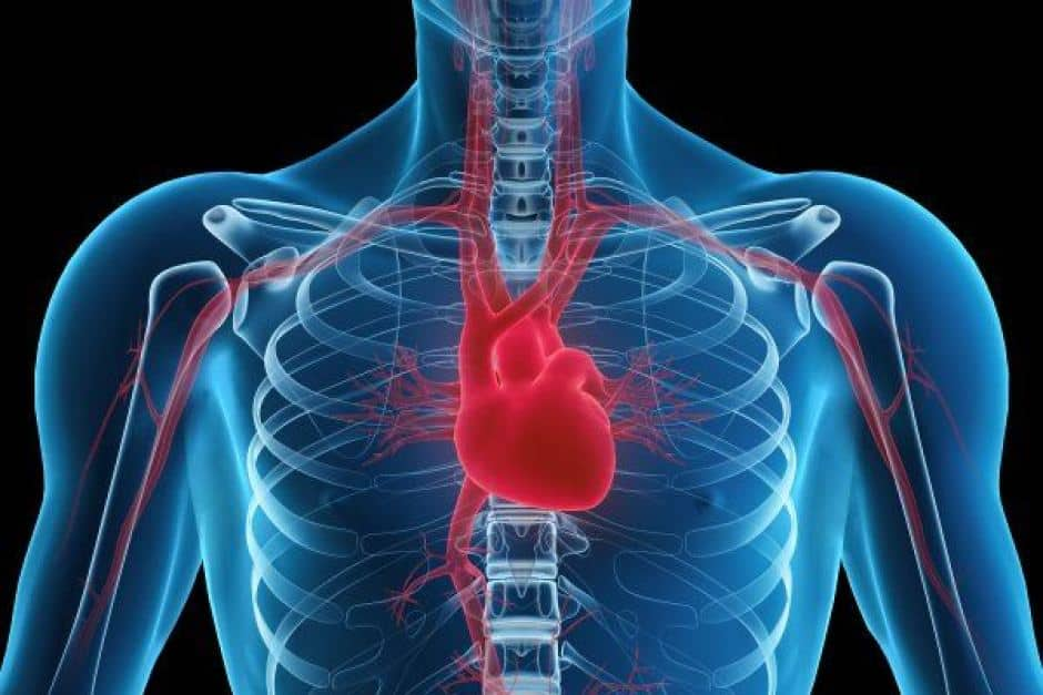 Functions of the heart Circulatory system how the heart works