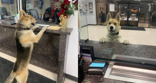 Lost dog goes viral after showing up at police station at 3.30am