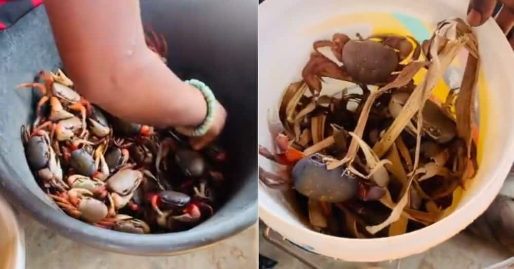 Ghanaian market woman handling big wild crabs like toys wins admiration on social media