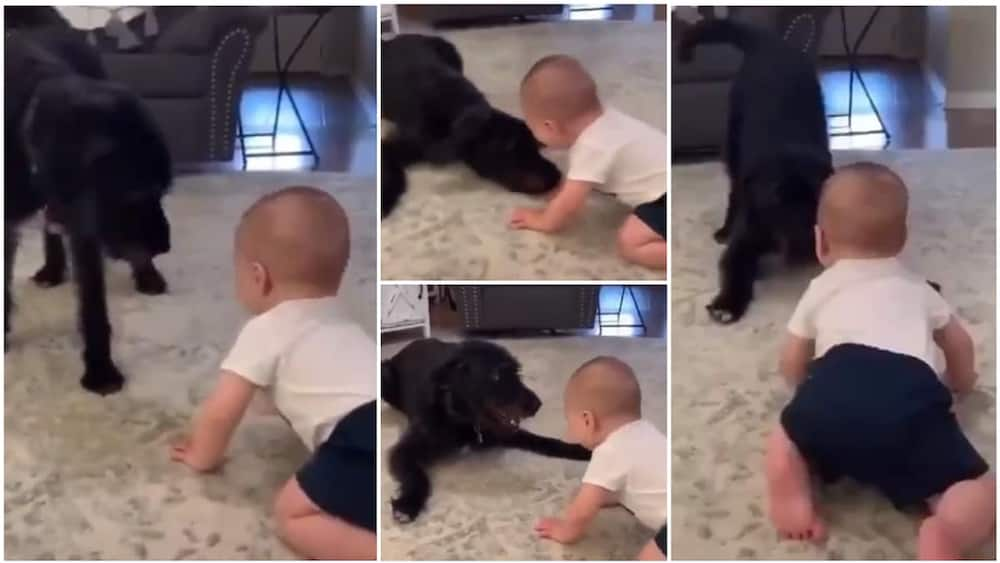 The toddler and the dog had a really great time together. Photo source: Twitter/@cctv_idiots