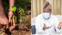 NDC MPs did not boycott Mensah Korsah's vetting; we went to plant trees - Ayariga