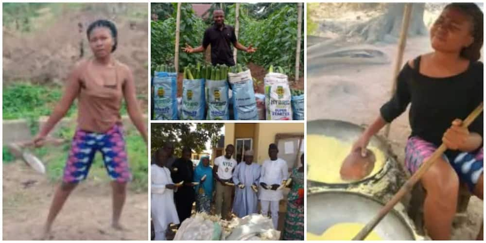 Smart young Nigerians who are excelling the farming business after leaving school
