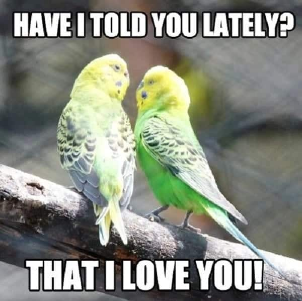 Funny i love you memes for her