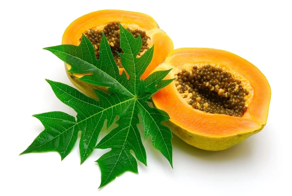 Health Benefits of Pawpaw Leaves in 2019 ▷ YEN COM GH