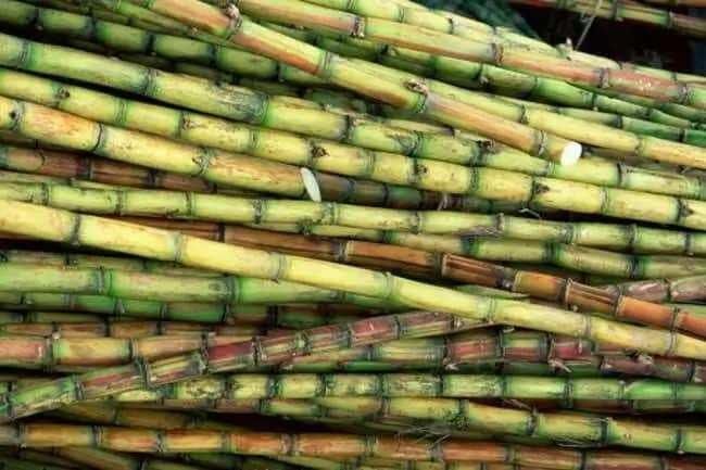 Health benefits of sugarcane juice