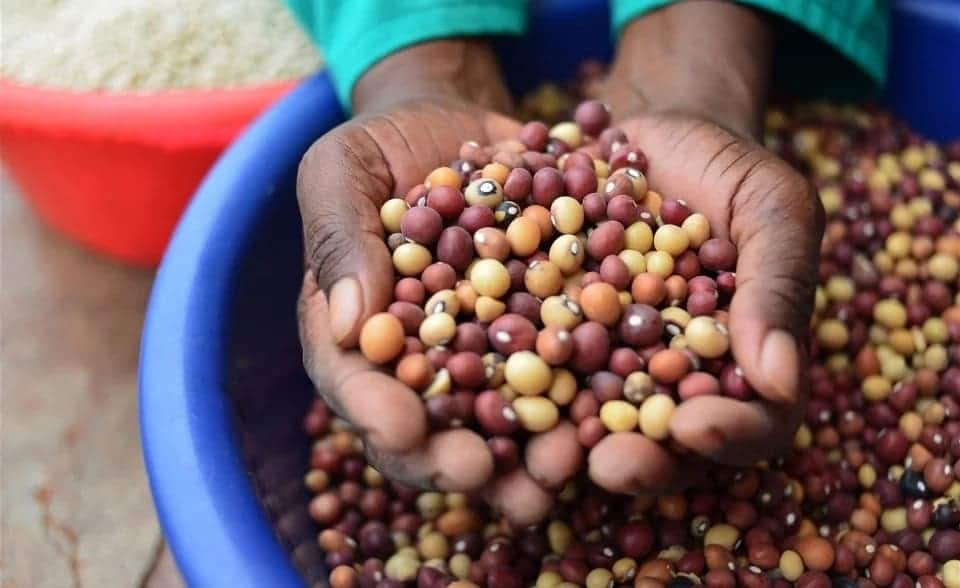 Bambara Beans - Recipes, Health Benefits and Other Facts you Need to Know