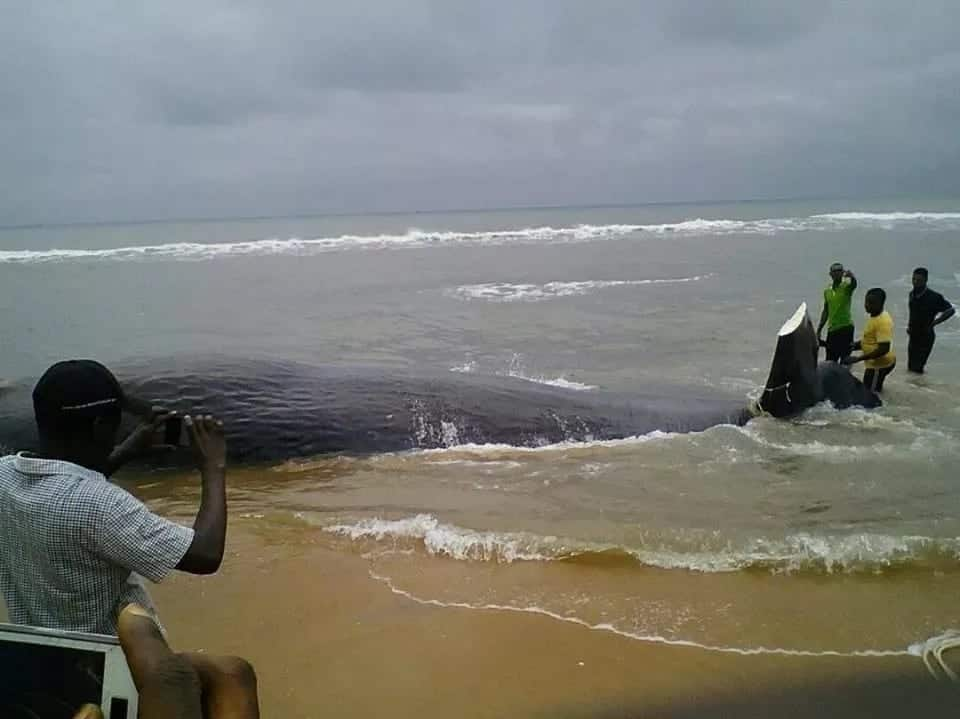 Keta residents wake up to find dead whale on their shores