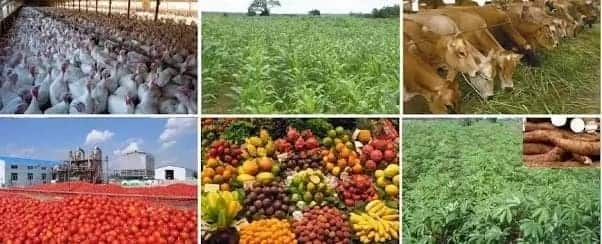 kwadaso agric college forms 2018 kwadaso agric college online application courses offered at kwadaso agric college kwadaso agric college courses