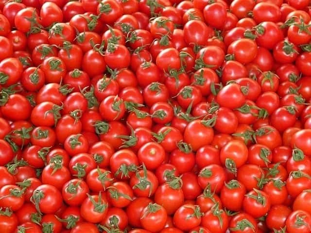 Tomato production in Ghana