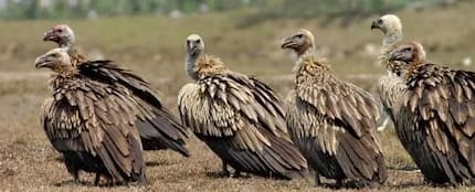 Bad, angry vultures are the cause of dumsor in Ghana today - ECG