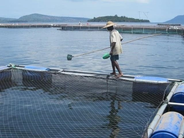 Fish Farming in Ghana - Tilapia Business Made Easy