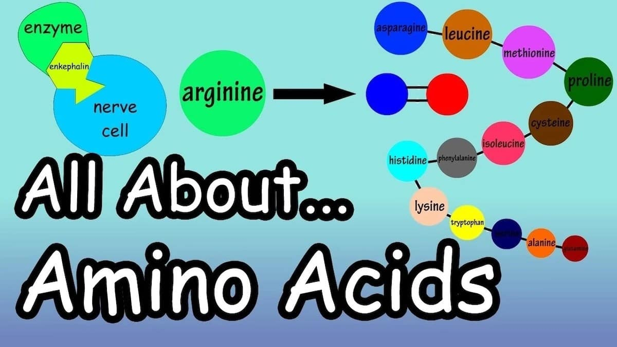 what are essential amino acids foods with amino acids benefits of amino acids