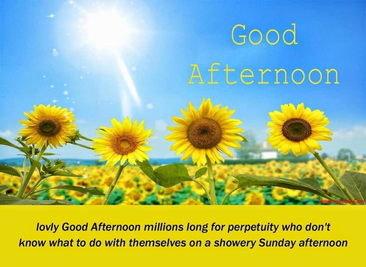 good afternoon quotes good afternoon quotes for him sweet good afternoon messages afternoon quotes