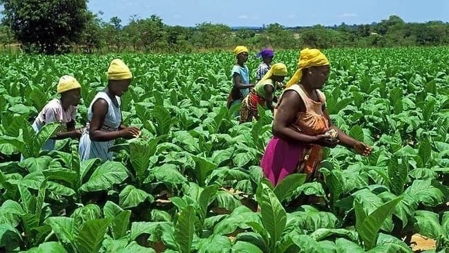 Importance of agriculture in Ghana Reasons why agriculture is important Economic benefits of agriculture Importance of farming Advantages of agriculture