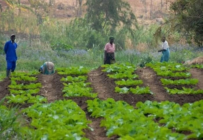 Reasons why agriculture is important Economic benefits of agriculture Importance of farming