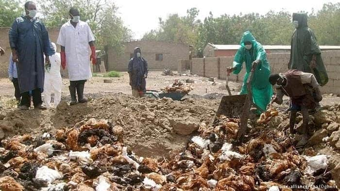 The outbreak of Bird flu in Ghana: Here are four things to know