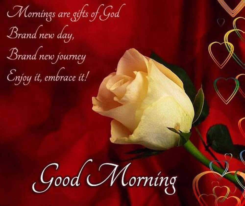 74+ GOOD MORNING Love Messages, Images, Wishes and Quotes