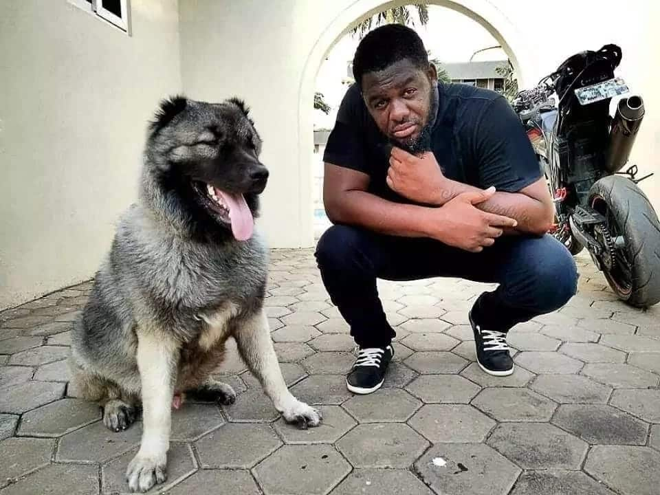 It's natural for men to cheat' - Bulldog confesses cheating on wife