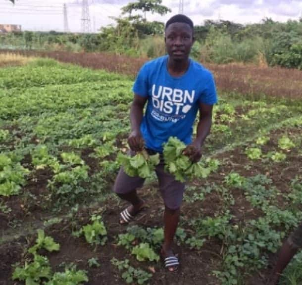 Photo of Legon graduate now a lettuce farmer is the best motivation for all without jobs