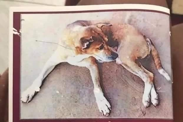 How a dog got buried in Volta Region will make you believe in the power of human love