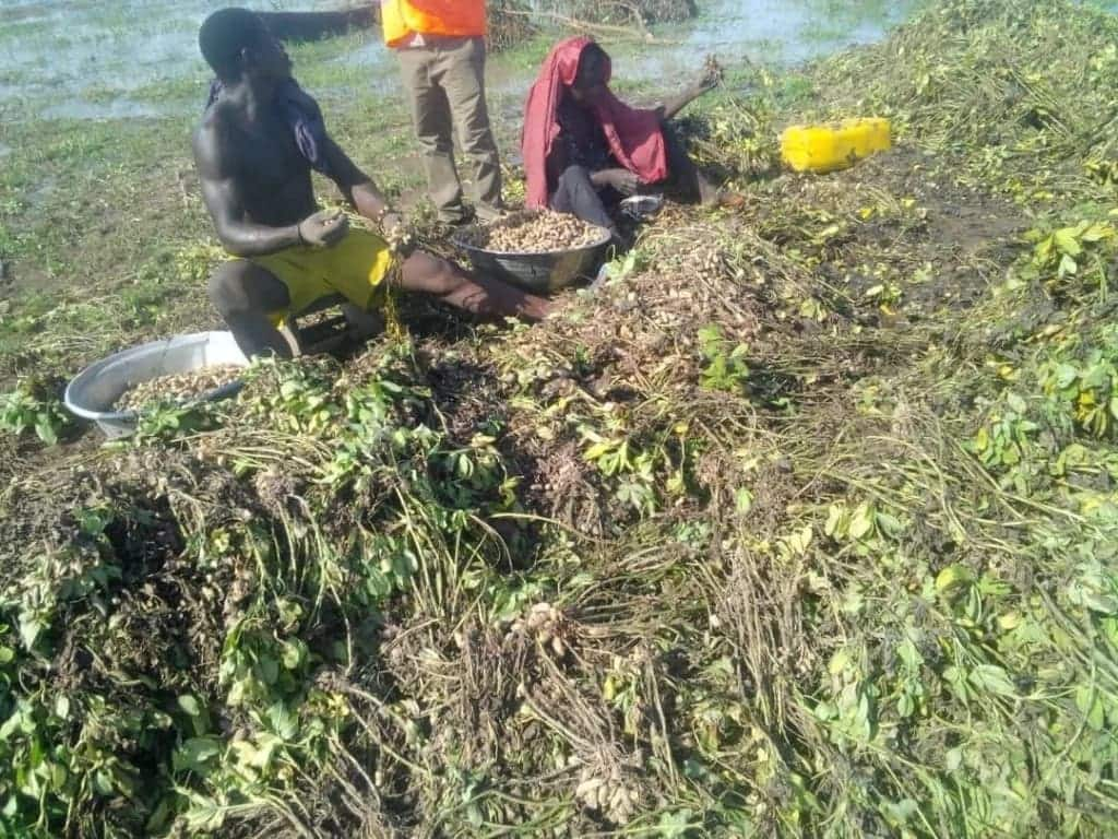 October 1 flood: 100 communities submerged; NADMO springs into action
