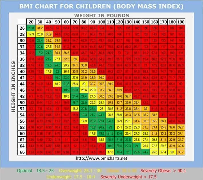 How To Calculate Bmi Formula For Males And Females