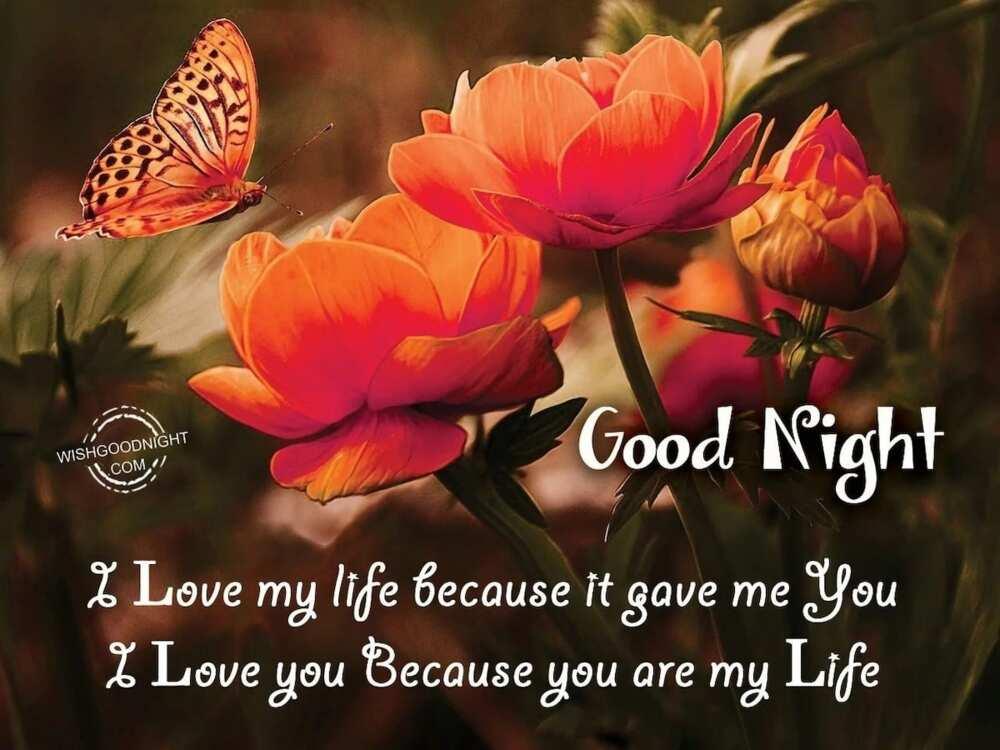 Romantic Good Night Message for My Love ▷ YEN COM GH