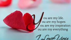 Exiting true love quotes for your lover