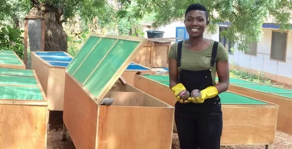 Ghanaian woman holds snails next to snail crates