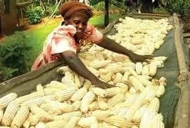 A note of appreciation to the Ghanaian farmer