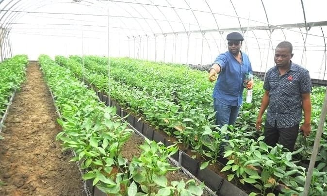 Greenhouse Farming in Ghana for Beginners