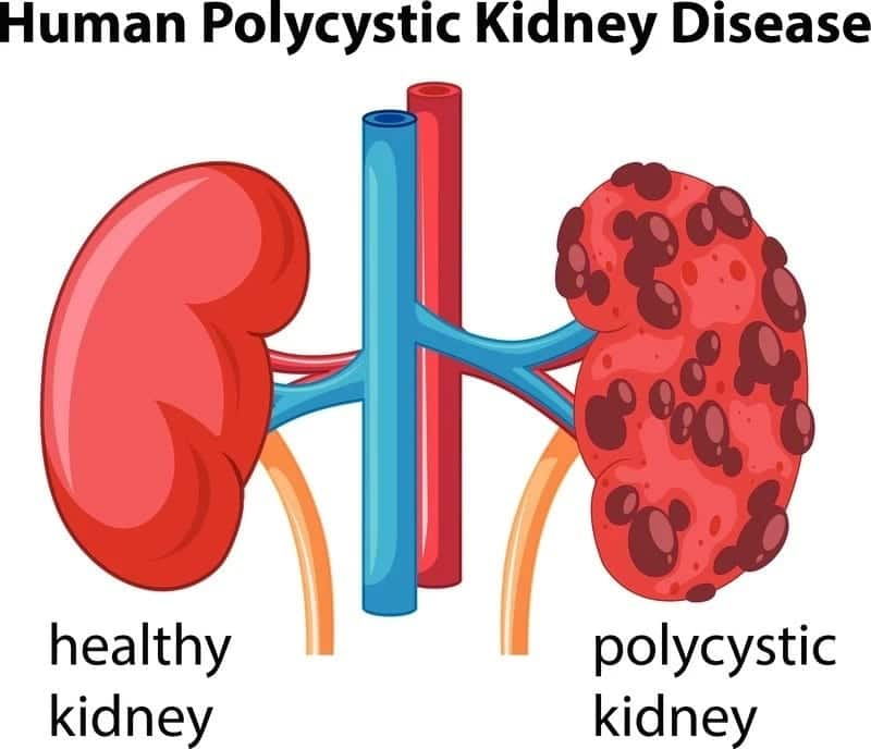 structure and function of kidney kidney definition and function normal function of kidney physiological functions of the kidneys