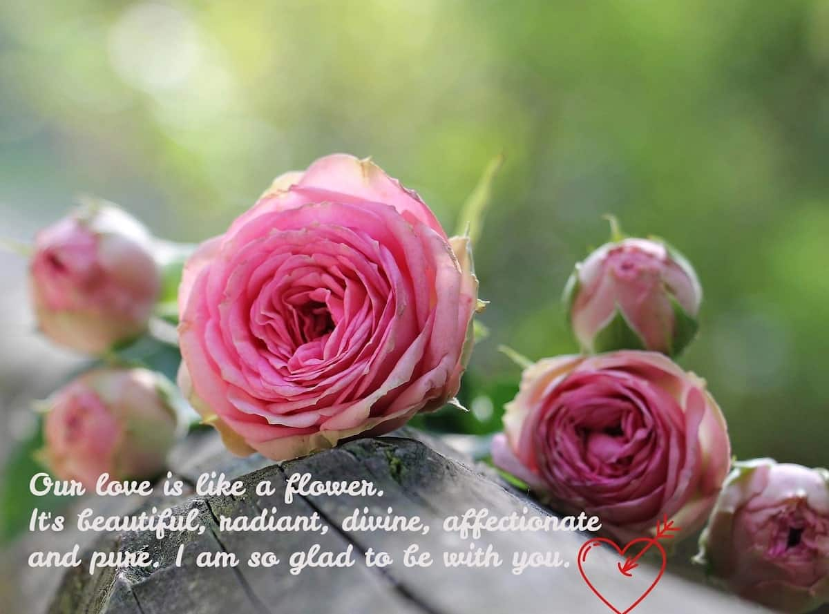 Romantic messages Love message for her Love flowers Beautiful flowers