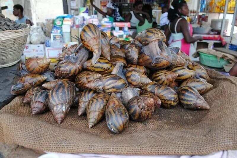 How to Start Snail Farming in Ghana