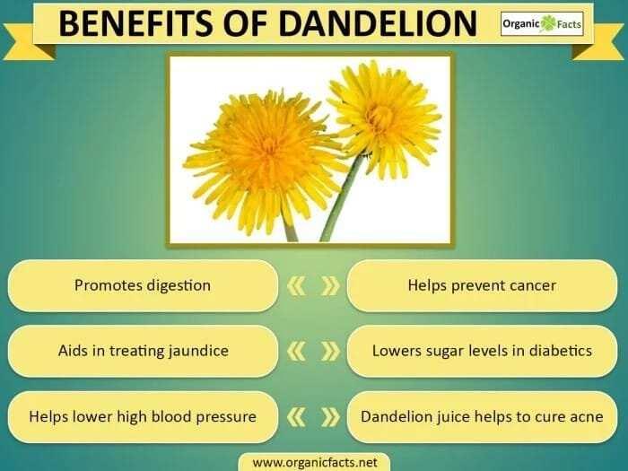 health benefits of dandelion leaves