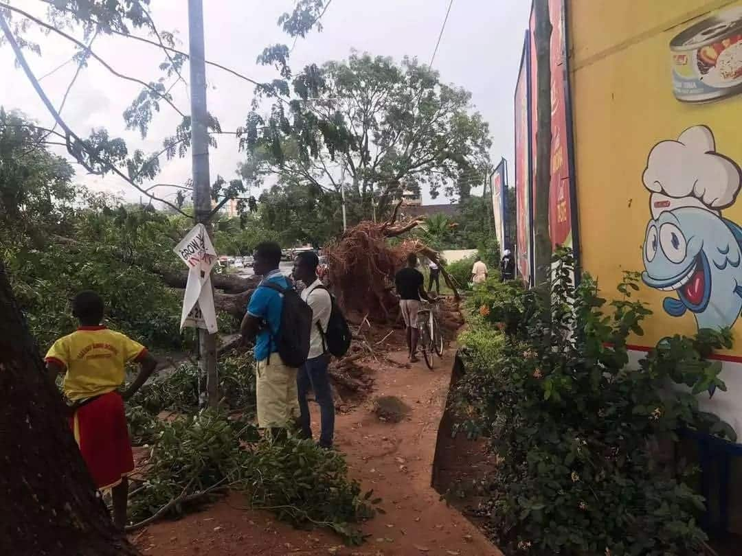 Rains cause big tree to fall on 'trotro' in front of KFC East Legon branch