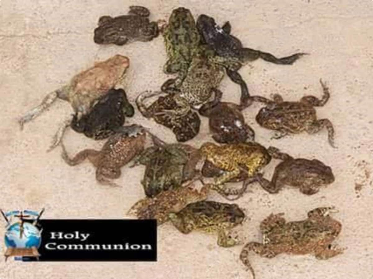 South African pastor feeds congregation dog meat and frogs to sure HIV and cancer