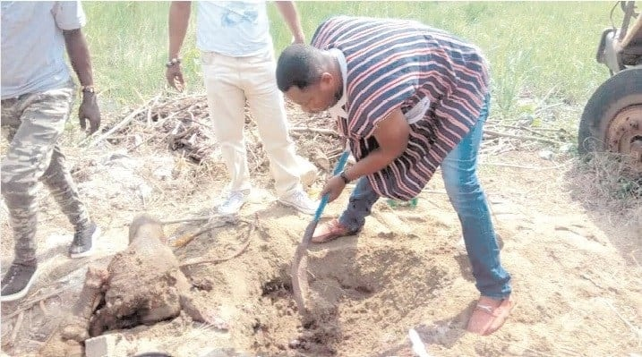 Chief and two others arrested for burying cow parts for rituals