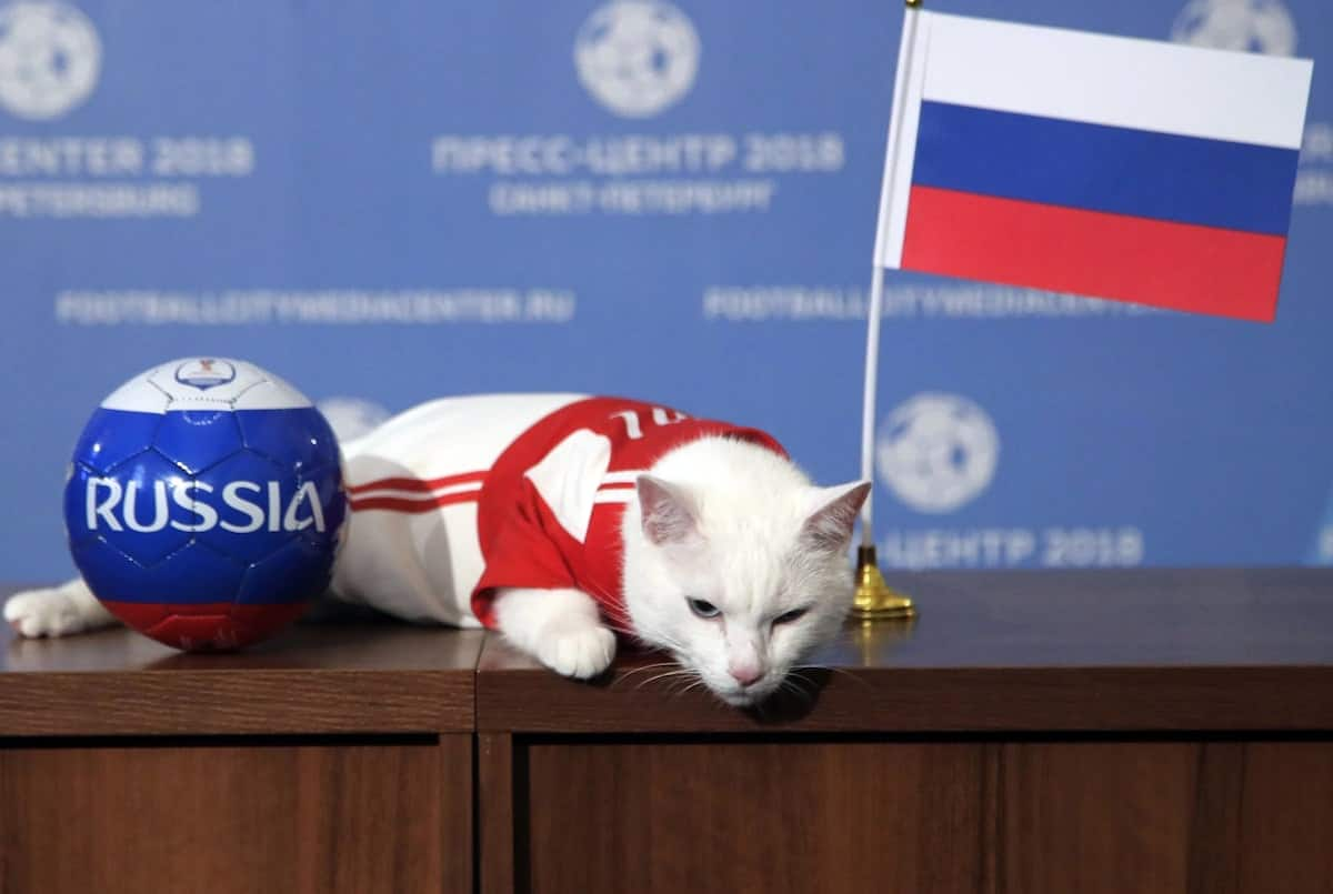 Meet the white cat that will be predicting the match results in the 2018 FIFA World Cup