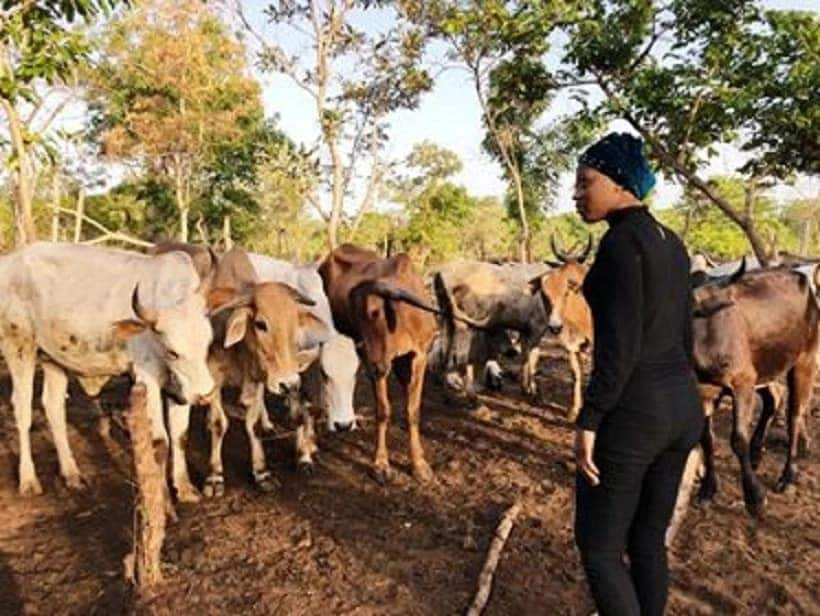 A farmer with cattle
