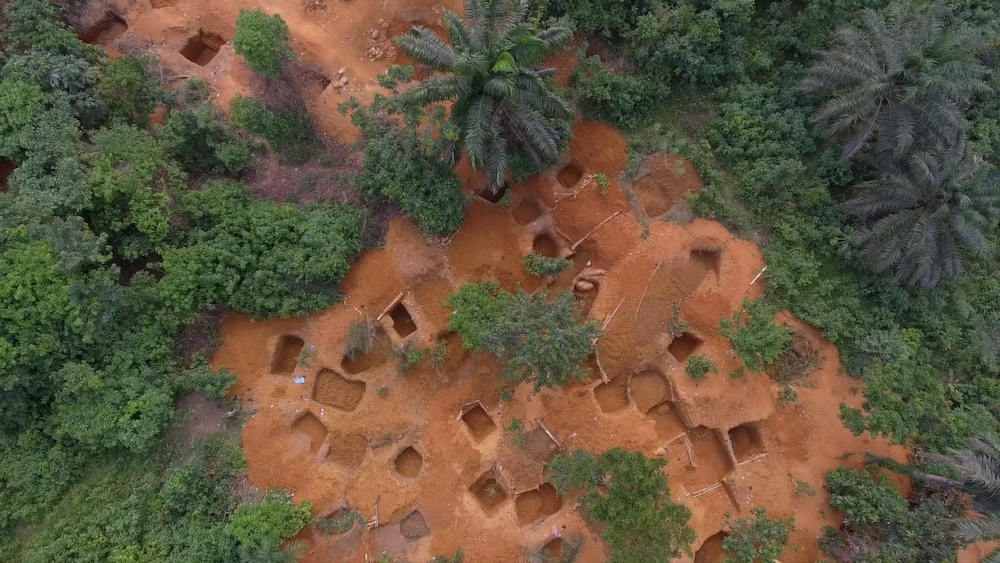 Illegal miners ransack cocoa farms in Eastern Region, COCOBOD alerts of dark economic times