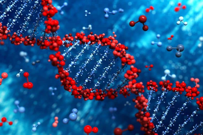 What is genotype