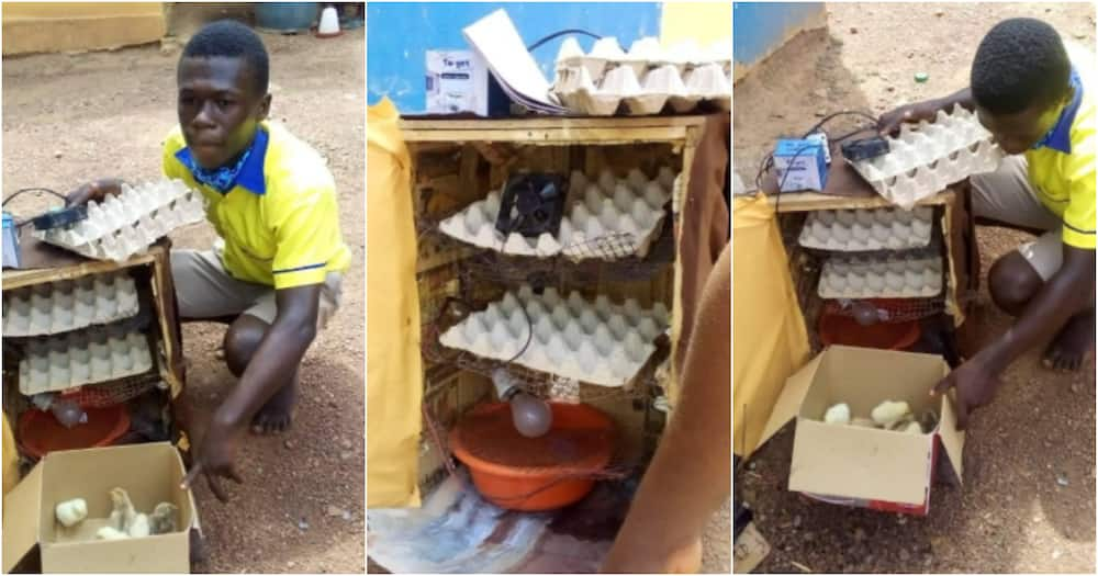 Samuel Asante: Ghanaian student builds electric incubator that hatches chicks