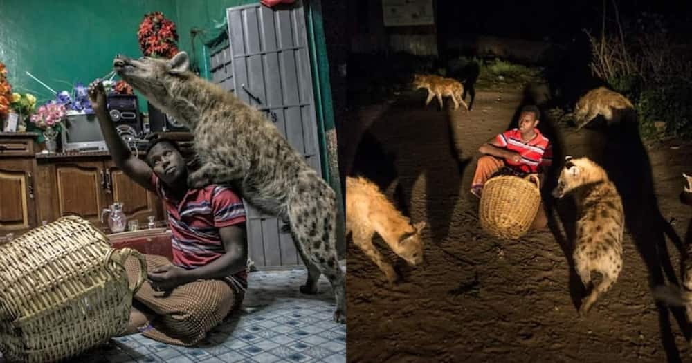 Abbas Yussuf lives with five hyenas in his Ethiopia home.