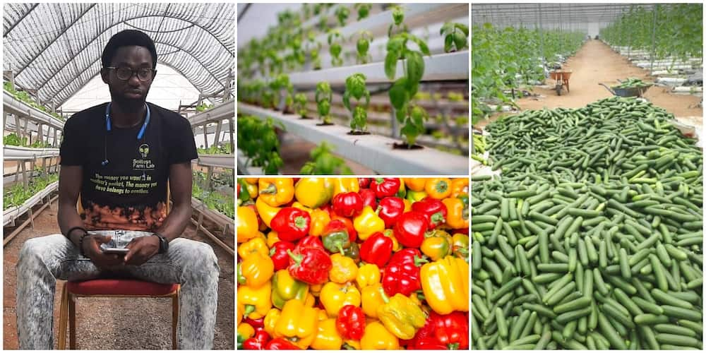 Nigerian Farmer Who Grows Crops in the Air Stuns the Internet With His Massive Harvest, Photos Causes Stir